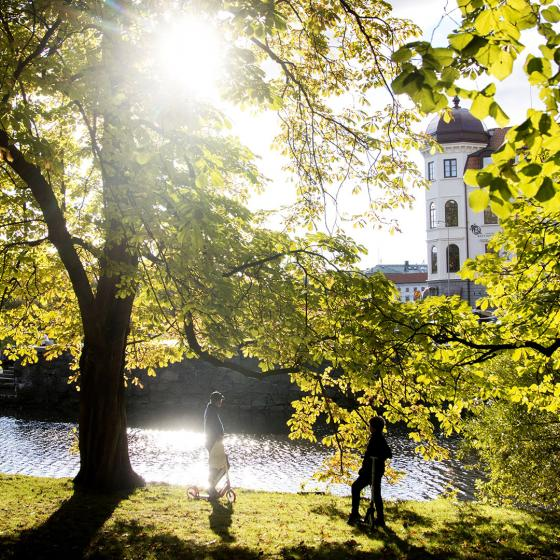 Sunlight and green trees by the harbour canal in Gothenburg